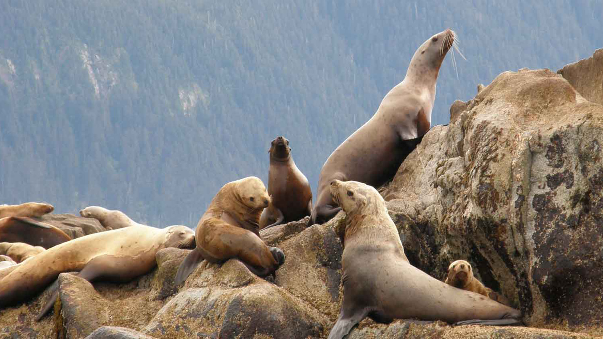 Sea Lion Party