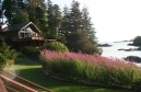 alaska_lodge_fireweed